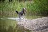 wet dog-1398236-s