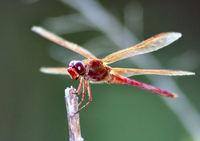 dragonfly-1393322